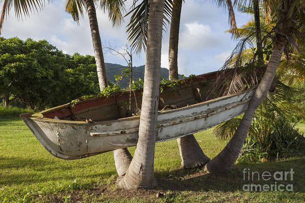 Photograph - Boat In A Tree Puerto Rico by Bryan Mullennix
