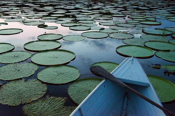 Victoria Amazonica Wall Art - Photograph - Boat On Rupununi River With Victoria by Keren Su