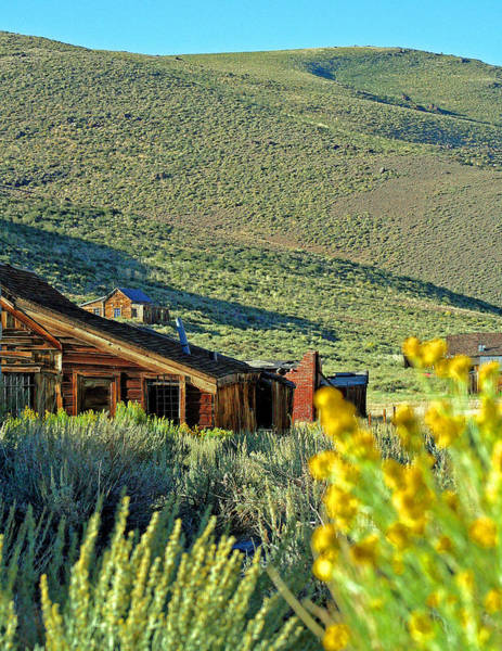 Photograph - Bodie Spring Flowers by Joseph Coulombe