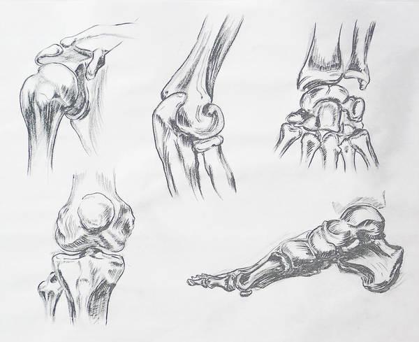 Drawing - Body Parts Anatomy Study by Irina Sztukowski
