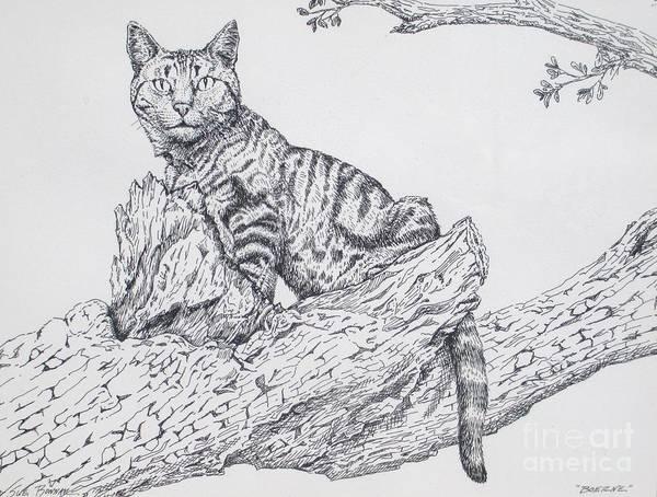 Tabby Drawing - Boerne by Sue Bonnar
