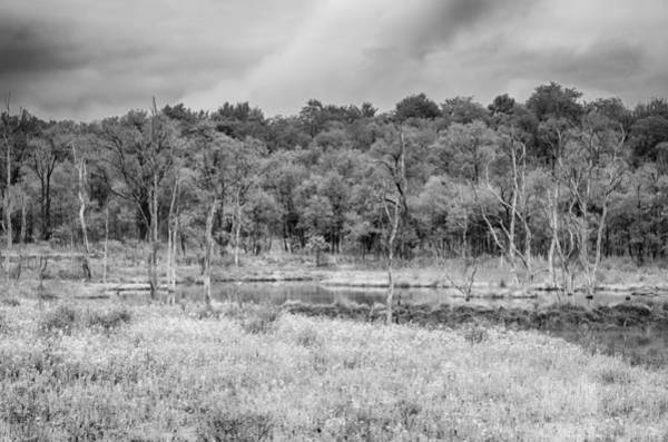 Photograph - Bog  7d07047b by Guy Whiteley