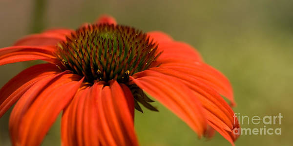 Photograph - Bold And Beautiful by Beve Brown-Clark Photography