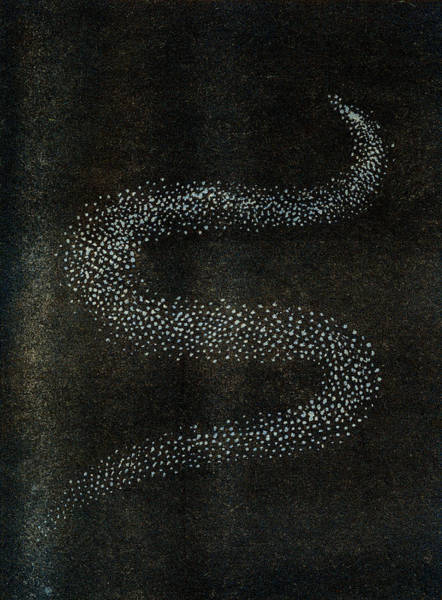 Influence Drawing - Bolide Forming A Serpentine Shape Due by Mary Evans Picture Library