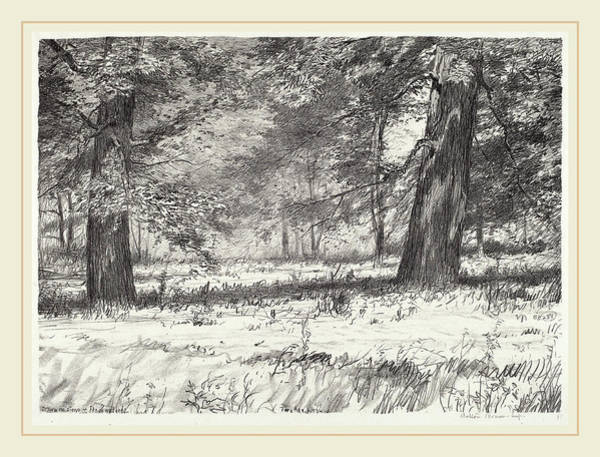 Maple Drawing - Bolton Brown, Two Maples, American, 1865-1936 by Litz Collection