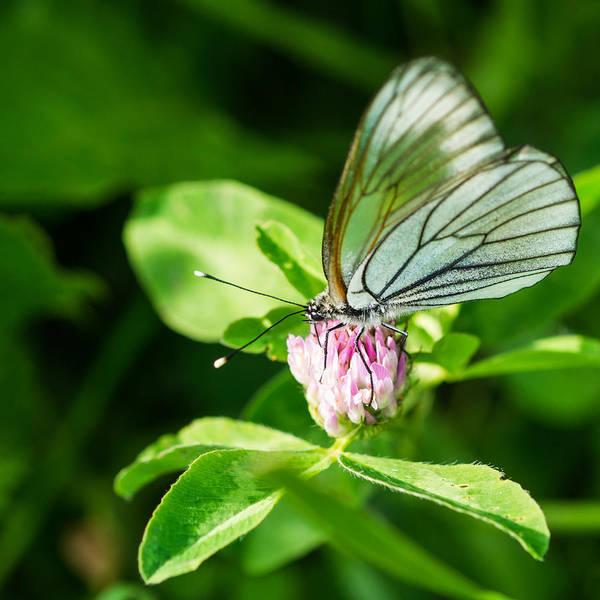 Snout Butterfly Photograph - Bon Appetit - Featured 2 by Alexander Senin