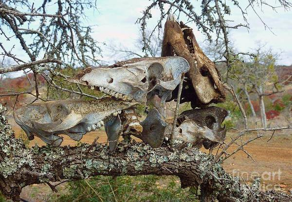 Photograph - Bone Collection by Mark Quigley