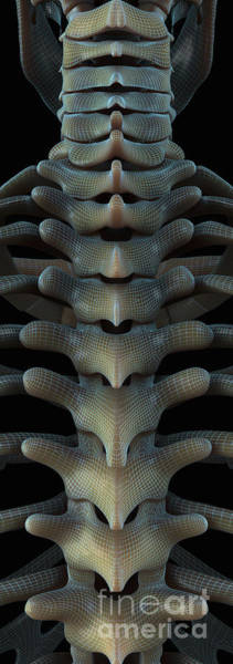 Photograph - Bones Of The Spine by Science Picture Co