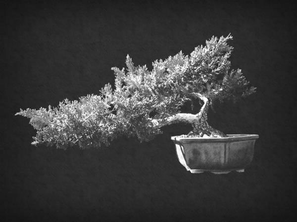 Photograph - Bonsai 4 by Frank Wilson