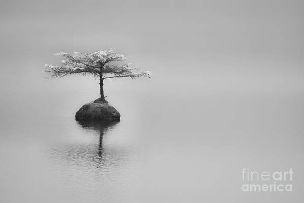 Photograph - Bonsai At Fairy Lake by Carrie Cole