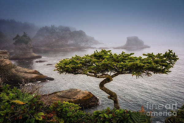 Photograph - Bonsai by Carrie Cole