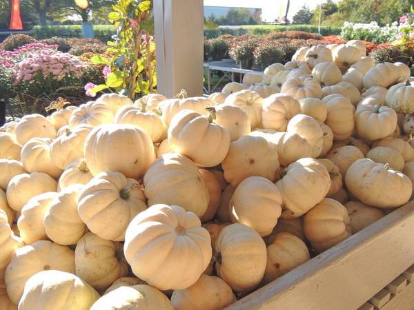 Photograph - Boo Pumpkins by Kimberly Perry