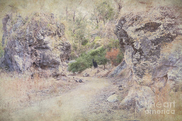 Photograph - Boomerang Gorge In Yanchep by Elaine Teague