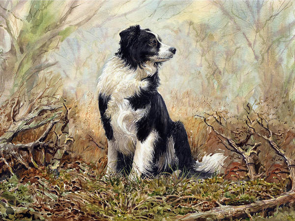 Wall Art - Painting - Border Collie by Anthony Forster