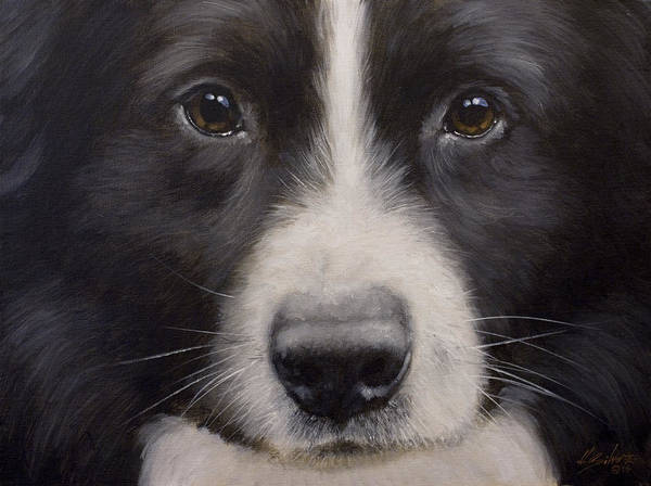 Painting - Border Collie Close Up by John Silver