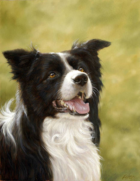 Painting - Border Collie Head Study by John Silver