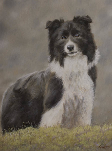 Painting - Border Collie Portrait Viii by John Silver
