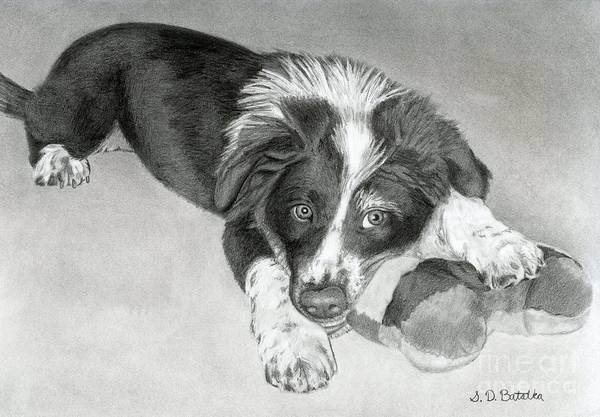 Chewing Wall Art - Drawing - Border Collie Puppy by Sarah Batalka