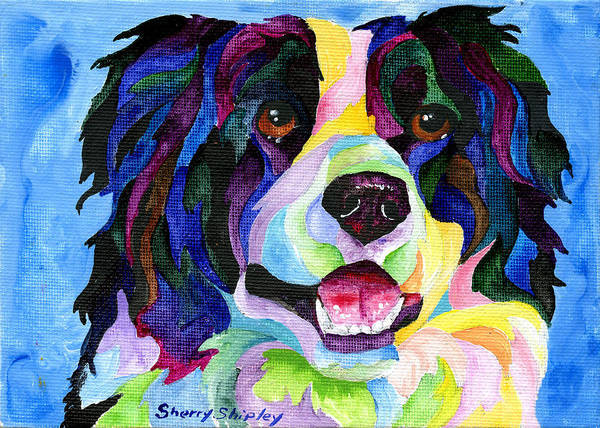 Painting - Border Collie by Sherry Shipley