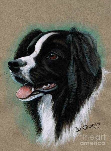 Mixed Media - Border Collie by Val Stokes