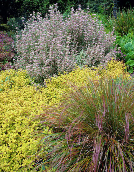 Horticulture Photograph - Border In Summer by Geoff Kidd/science Photo Library
