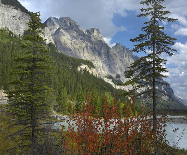 Mt. Wilson Photograph - Boreal Forest And Mount Wilson Banff by Tim Fitzharris