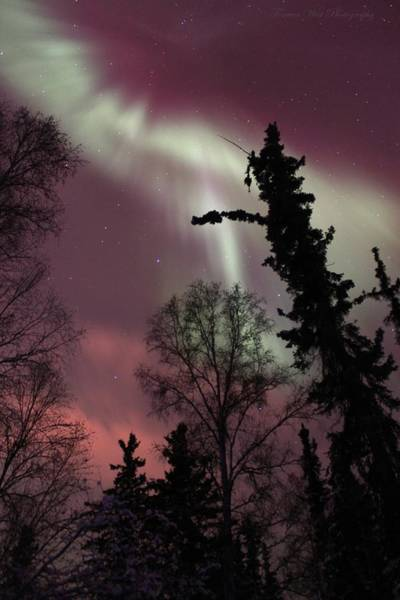 University Of Alaska Photograph - Boreal Forest Aurora by David Broome