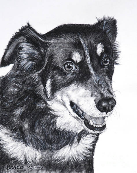 Drawing - Bosco by Kate Sumners