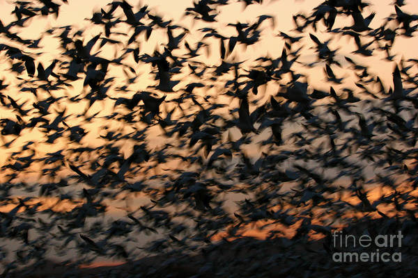 Photograph - Bosque Sunrise Blastoff by John F Tsumas