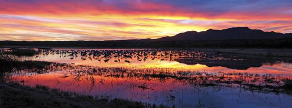 Photograph - Bosque Del Apache by Steven Ralser