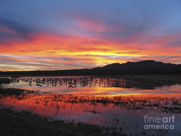 Photograph - Bosque Sunset I by Steven Ralser