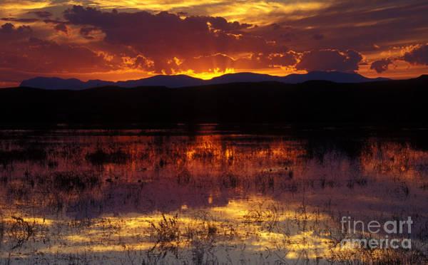 Photograph - Bosque Sunset - Orange by Steven Ralser