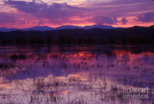 Bosque Sunset - Purple Art Print