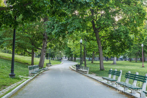 Photograph - Boston Common Walk by Susan Cole Kelly