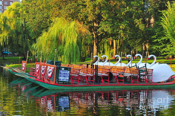 Swan Boats Photograph - Boston Swan Boats by Catherine Reusch Daley