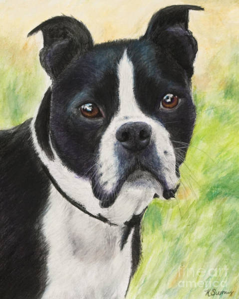 Art Print featuring the painting Boston Terrier by Kate Sumners