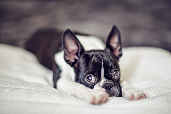 Sweet Puppy Photograph - Fina by Nailia Schwarz