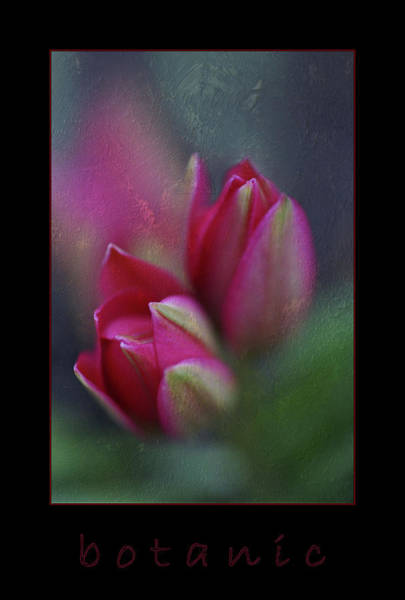 Photograph - Botanic by Annie Snel