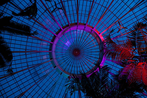Photograph - Botanical Dome by Guy Whiteley
