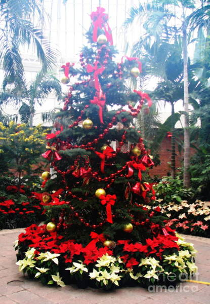 Photograph - Botanical Gardens Christmas Tree In The Mist With Oil Painting Effect by Rose Santuci-Sofranko