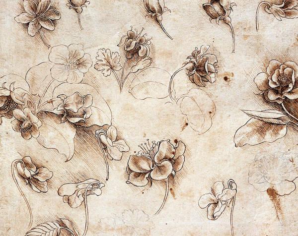Blooms Drawing - Botanical Table by Leonardo Da Vinci