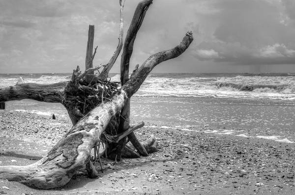 Photograph - Botany Bay by Michael Colgate