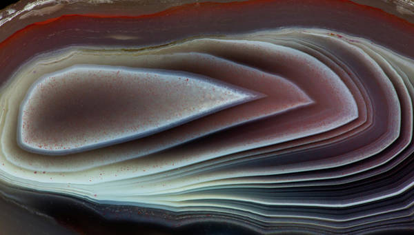 Agate Photograph - Botswana Banded Agate, Quartzsite, Az by Darrell Gulin