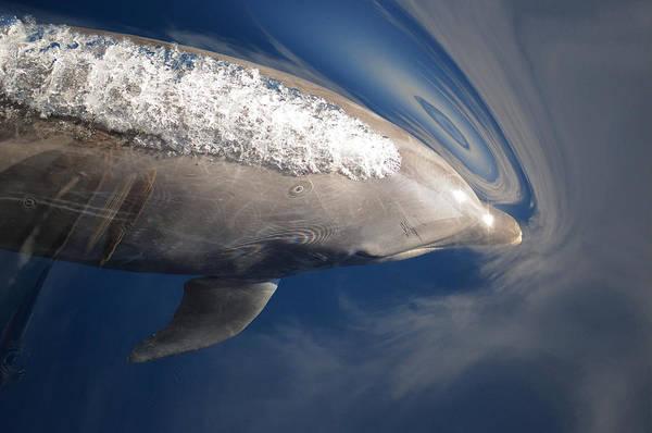 Photograph - Bottlenose Dolphin Spouting Sea by Malcolm Schuyl