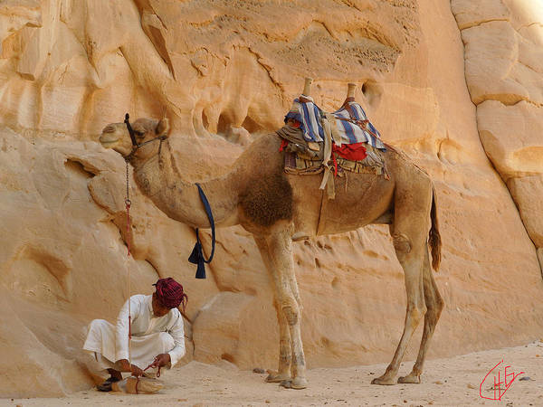 Photograph - Bou Bou Camel With Beduin Owner by Colette V Hera  Guggenheim