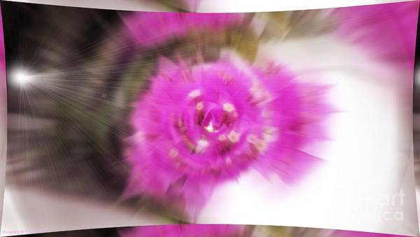 Photograph - Bougainvillea Abstract by Gena Weiser