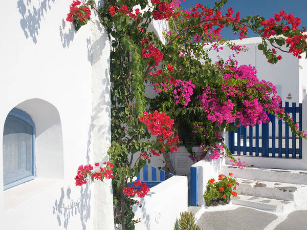 Village Gate Photograph - Bougainvillea, Imerovigli, Santorini by David C Tomlinson
