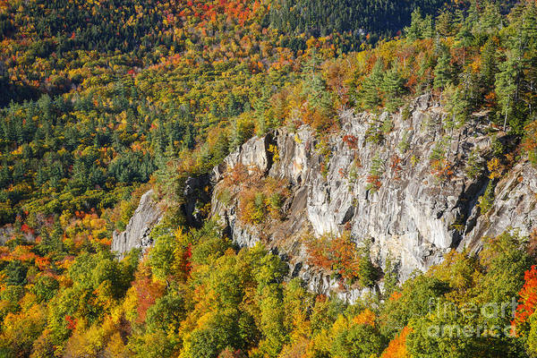 Photograph - Boulder Loop Trail - White Mountains New Hampshire by Erin Paul Donovan