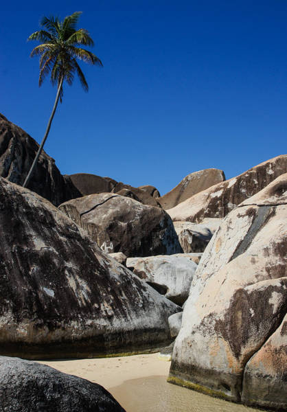 Wall Art - Photograph - Boulders And Palm Trees by Georgia Mizuleva