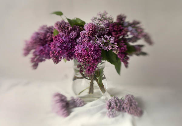 Nature Wall Art - Photograph - Bouquet Of Lilacs In A Glass Pot by Jaroslaw Blaminsky